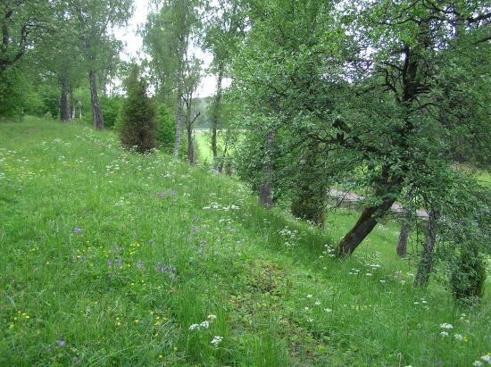 Jarnforsen, Швеция: Lundens naturreservat - Foto: Charlotta Larsson