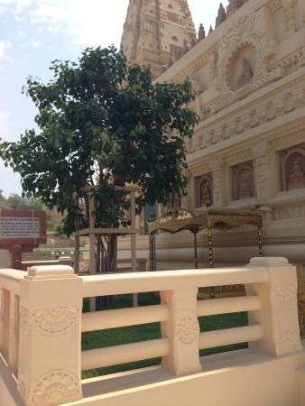 Thatta Thattaha Maha Bawdi Pagoda: The bodhi tree from Sri Lanka and the throne of enlightenment