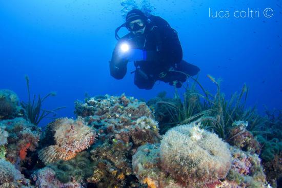 Capo mortola sub con scorfano foto di pianeta blu - Dive center blu ...