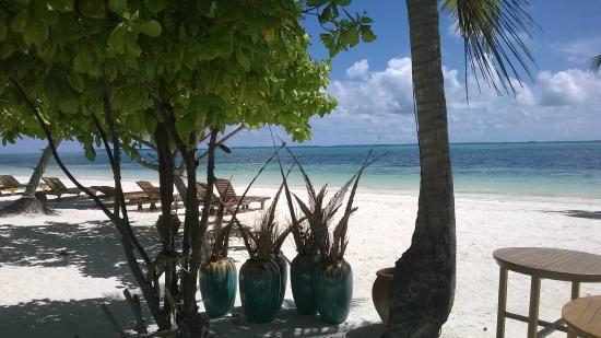 Canareef Resort Maldives: Strand