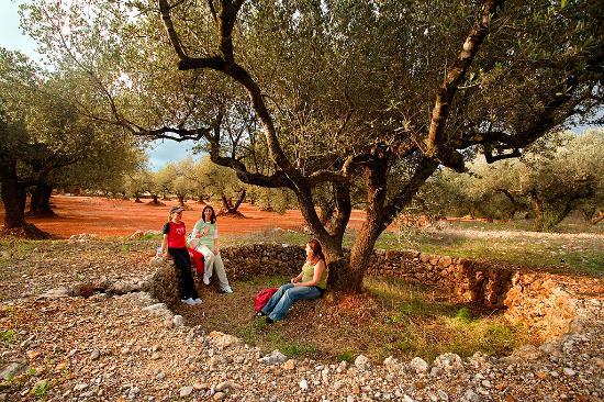 La Sénia, España: Campos de olivos y construcciones de piedra seca