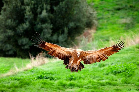 La Sénia, España: Fauna salvaje - Parque Natural dels Ports