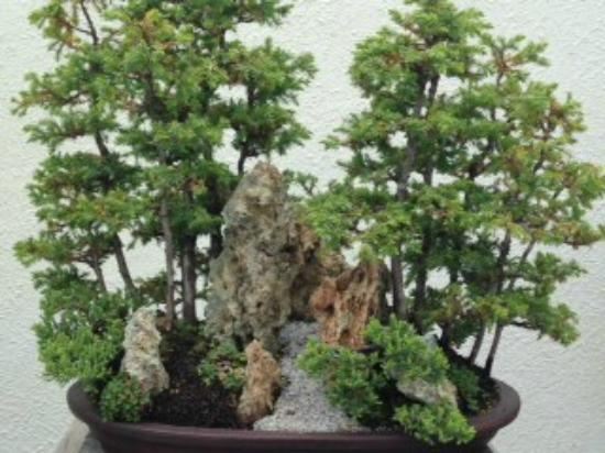Penjing Picture Of National Bonsai Penjing Museum Washington Dc Tripadvisor