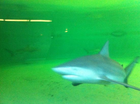 Branson's Wild World: Shark