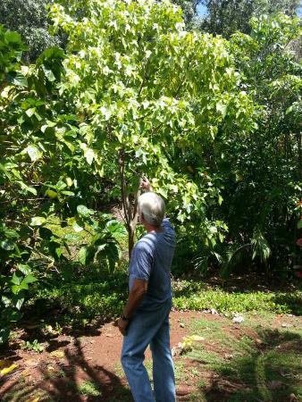 Hawaiian Organic Noni Farm