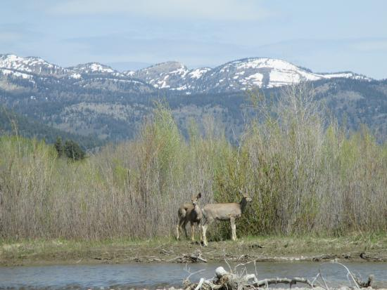 Jackson Hole Whitewater: Deer spotted during our scenic float down the Snake River