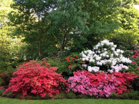 Jardin des plantes d'Angers, petit trésor de verdure!