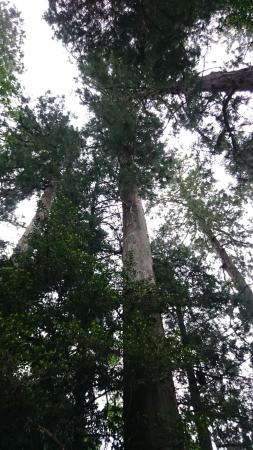 Harimakuni Ichinomiya Iwa Shrine : 相当な樹齢の木々が!広い神社で、たっぷり森林浴できます!