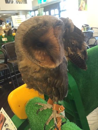 Shonan Owl Park