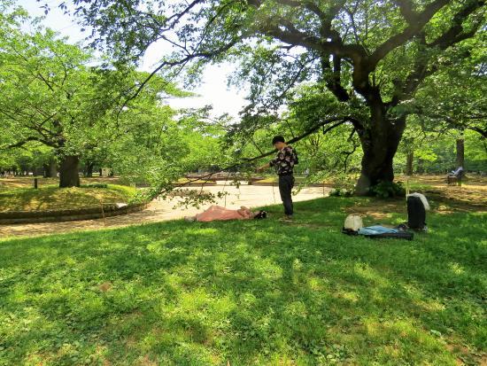 ケアフリー ワンダー - Picture of Yoyogi Park, Shibuya - TripAdvisor