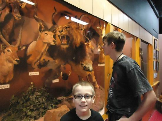 Cumberland Museum: Animal Displays