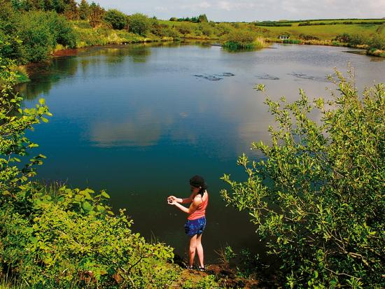 St. Tinney Farm Holidays: Lakes