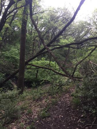 Tuthill Park