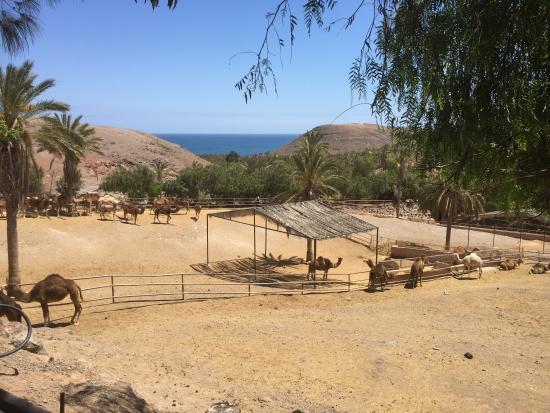 GIRAFFE - Picture of Oasis Park Fuerteventura, Fuerteventura - TripAdvisor