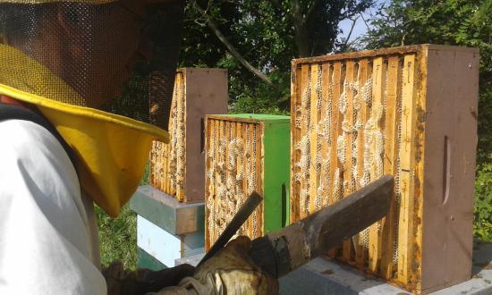 Agriturismo Pedrosola: a prendere il miele che serviremo per le vostre colazioni