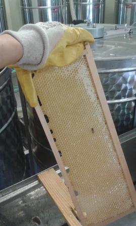 Agriturismo Pedrosola: miele di acacia... una delizia!