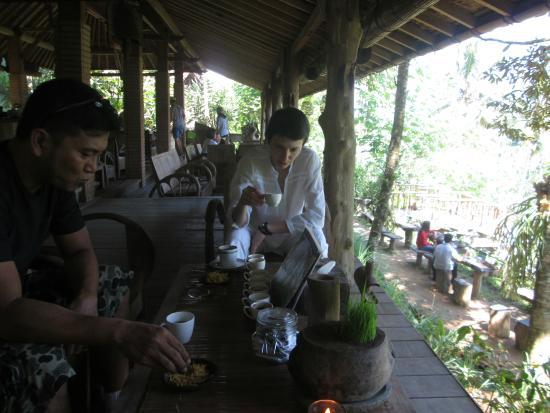 Wayan Ariana Experience Bali Driver - Private Day Tours: Tasting coffee luwak