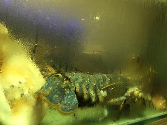 Mares Pesca: photo0.jpg