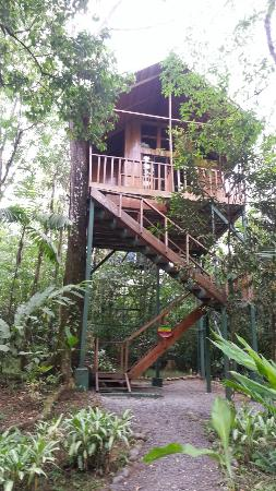 Tree Houses Hotel Costa Rica: Toucan Tree House