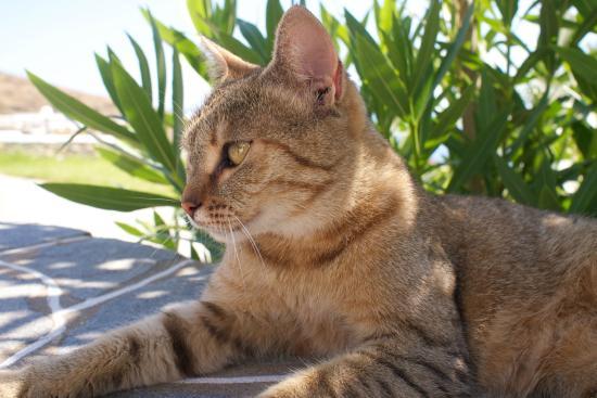 Cape Napos: Un des félins du coin, qui nous tenait compagnie au petit-déjeuner.