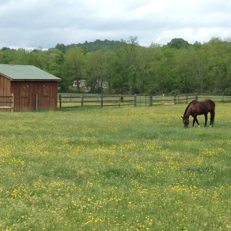Fairfield, VA: Quiet pasture