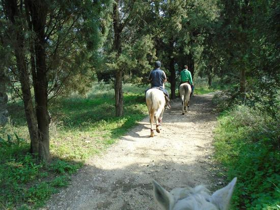 Arena horse riding corfu