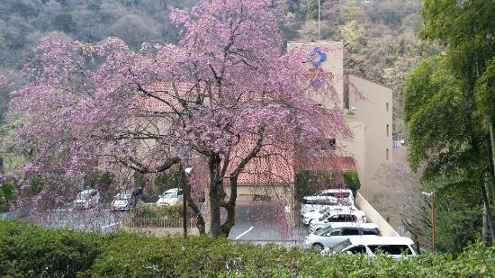 Hotel Okuyumoto : Hotel view from road