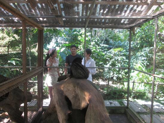 Wayan Ariana Experience Bali Driver - Private Day Tours: Wayan said about Luwak