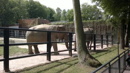 Krakow Zoo (Ogrod Zoologiczny) : Elephant enclosure