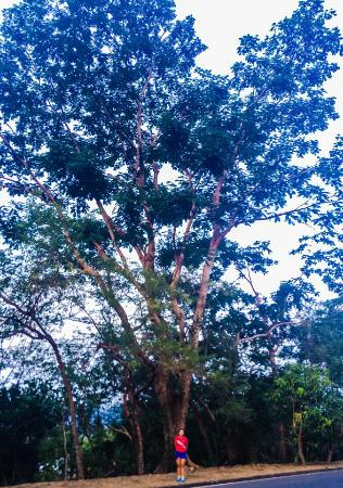 Forest View Leisure Residences : While jogging around the nearby areas, we came across several old and interesting trees