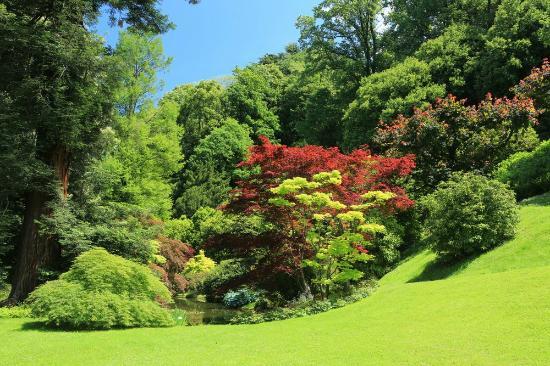 Aceri del laghetto foto di i giardini di villa melzi for Laghetto i giardini