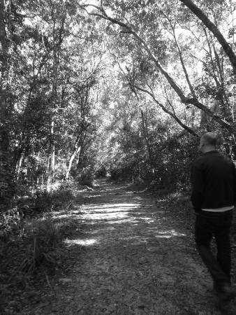 Circles in the Forest: At the start of our walk...