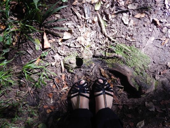 Circles in the Forest: My feet