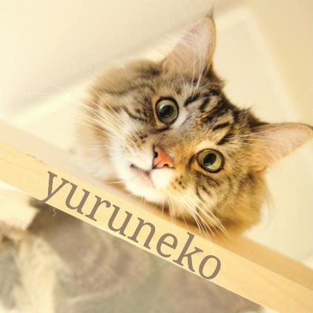 Cafe Yuruneko