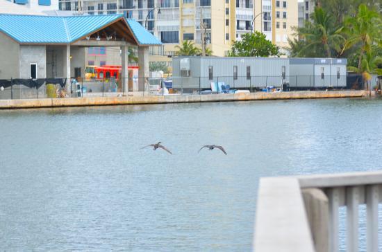 Holland Park: Inter Coastal view