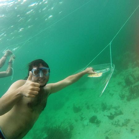 Île de Colon, Panama : Volar bajo el agua