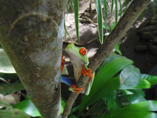 Tours Paradise Costa Rica : Tortuguero National Park