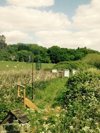 Welling, UK : Bee hives and sheep