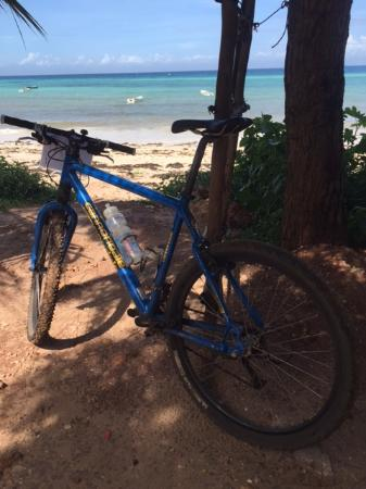 Bike Zanzibar - Day Tours: Time to swim with the dolphins