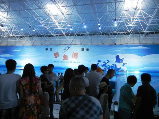 Ocean Aquarium of Penglai : ショー