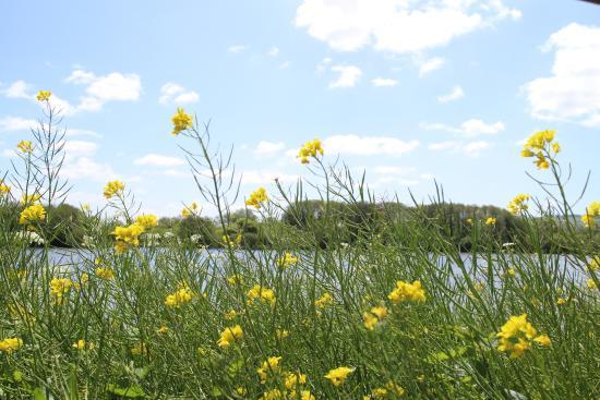 ซัมเมอร์เซ็ต, UK: View with flowers