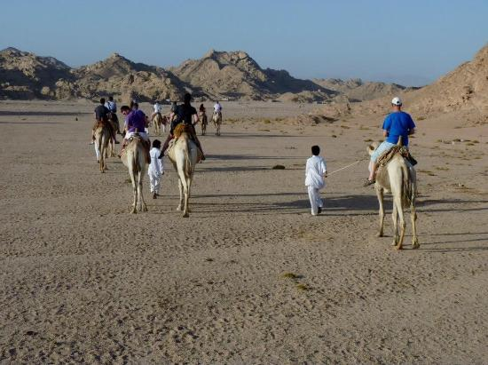 Sharm Wonders - Day Tours: Camel ride