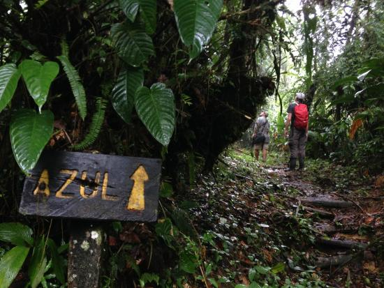 "Rara Avis Rainforest Lodge & Reserve: One of the trails (""Azul"")"