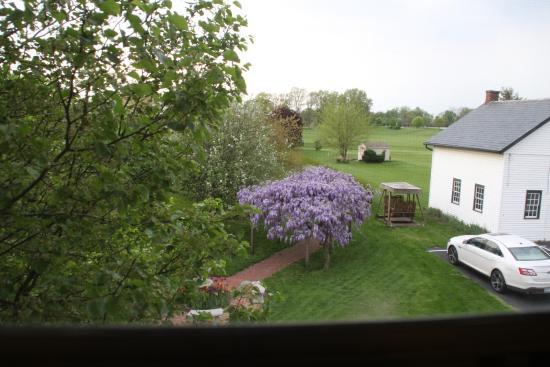 Walnut Lawn B&B : View from Room