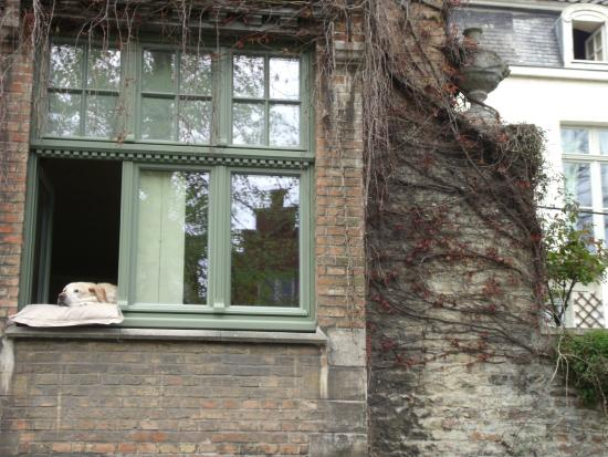 Boat trip famous dog sits in window picture of oud huis de peellaert bruges tripadvisor - Oud huis ...