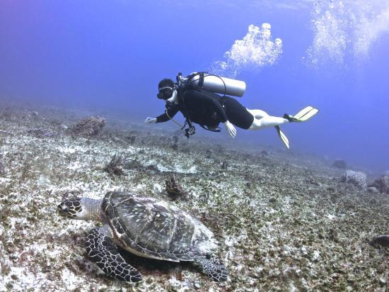 Cenote Scuba Dive Center