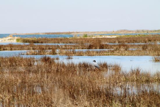 Smith Island Inn: local wildlife