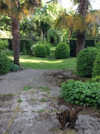 Rosebud : Back Garden