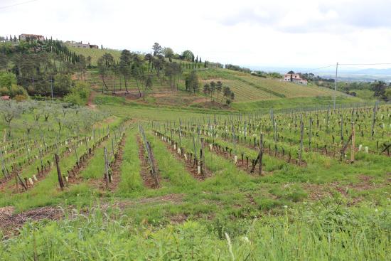Villa La Nina: Panorama a 2 passi dalla Villa