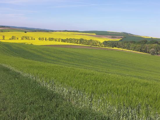 Moravia Trip: 波打つ草原と菜の花のコントラストが印象的です。